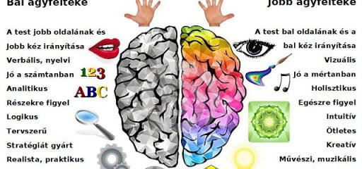 agyunk működése
